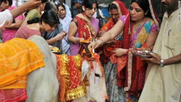 تقدیس گاو در هند
